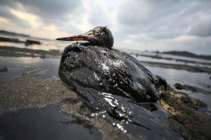 uccello marino incatramato