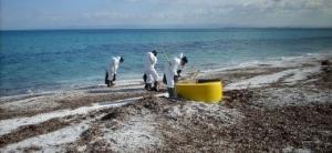 Golfo dell'Asinara, operazioni di disinquinamento