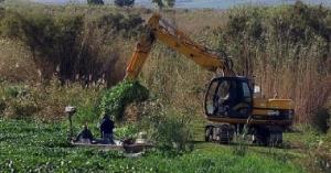 Riola Sardo, eradicazione delle piante infestanti
