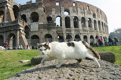 Roma, Colosseo, Gatto