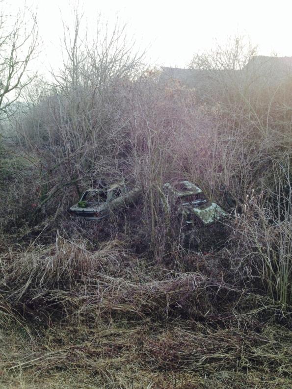 Veggiano, automobili abbandonate nella vegetazione