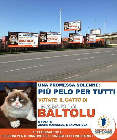 il gatto di Baltolu