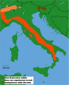 Italia, distribuzione del Lupo (Canis lupus italicus)