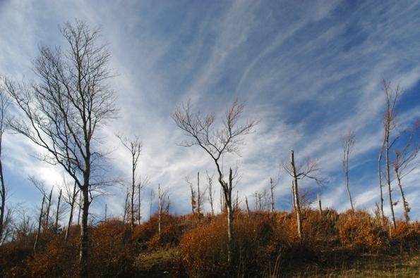 Monte Nerone, inadeguatezza del bosco ceduo sulle vette per la protezione del suolo
