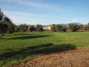 Bardolino, Cisano, campagna presso il Lago di Garda