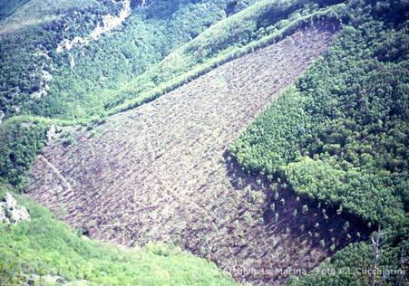 Rio Vitoschio, taglio impattante su bosco invecchiato (oltre 30 anni) in area di grande pregio naturalistico