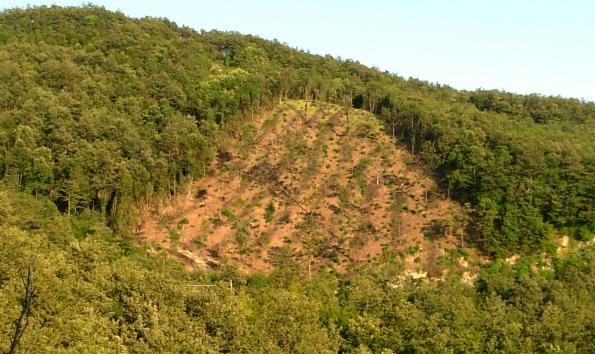 Foresta demaniale di Bocca Serriola, riconversione a ceduo di bosco ad alto fusto