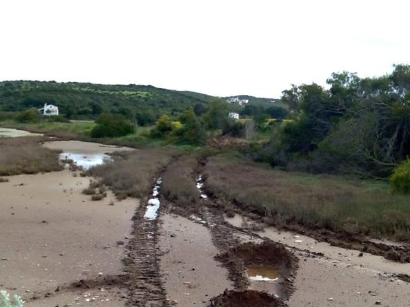 Carloforte, Saline, taglio vegetazione e transito veicoli