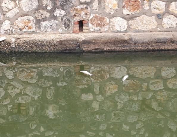 Cagliari, Canali di Terramaini e di Mezzo, morìa pesci (11-12 aprile 2014)