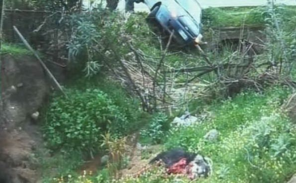 Irgoli, cane ucciso