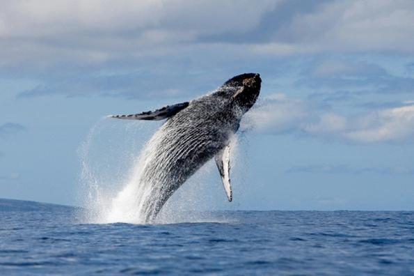 Balena (da National Geographic)