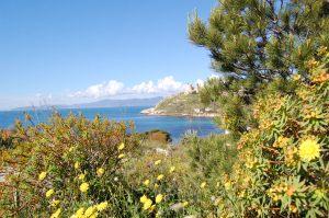 macchia mediterranea, sole, mare