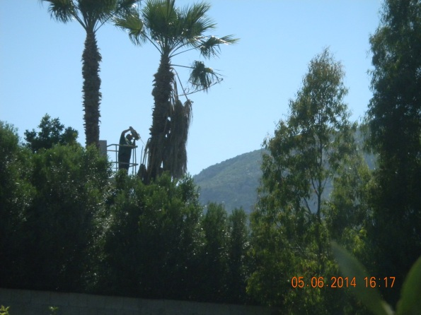 "Villasimius, giardino ""Lo Sciabecco"", potatura alberi"