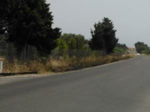 Quartu S. Elena, terreno percorso dal fuoco, 24 giugno 2014