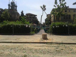 Firenze, cantieri Tramvia, taglio alberi