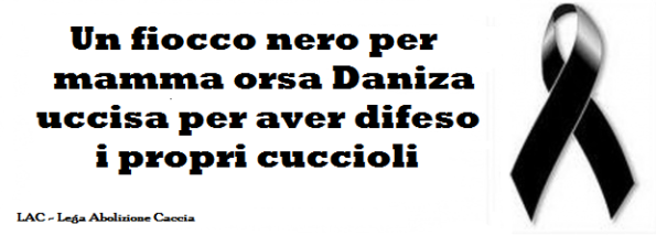 xDaniza6