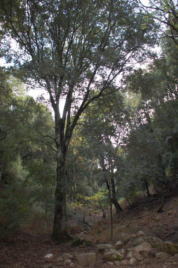 bosco mediterraneo