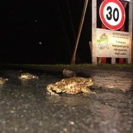 segnaletica stradale per i Rospi (da www.laprovinciadilecco.it)