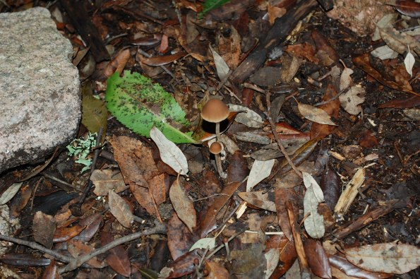funghi nel sottobosco