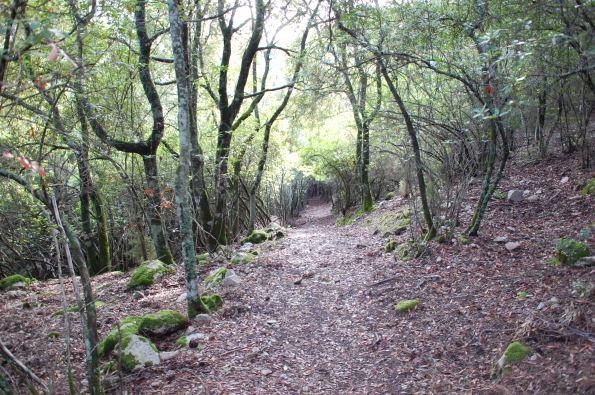 Il vincolo paesaggistico tutela il bosco a prescindere for Vincolo paesaggistico