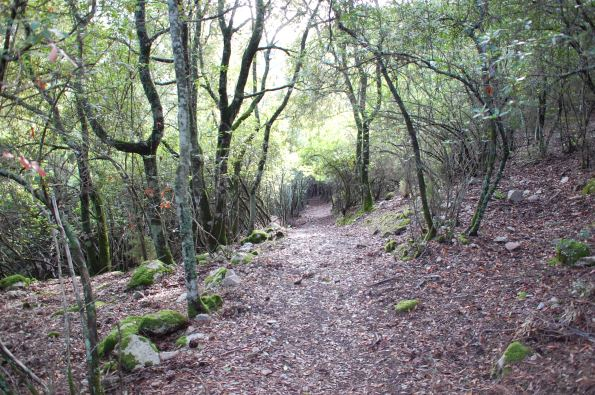Sette Fratelli, Foresta demaniale, sentiero nel bosco