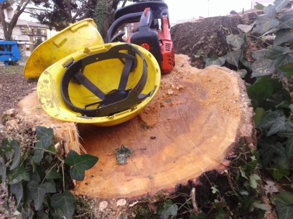 alberi tagliati in città