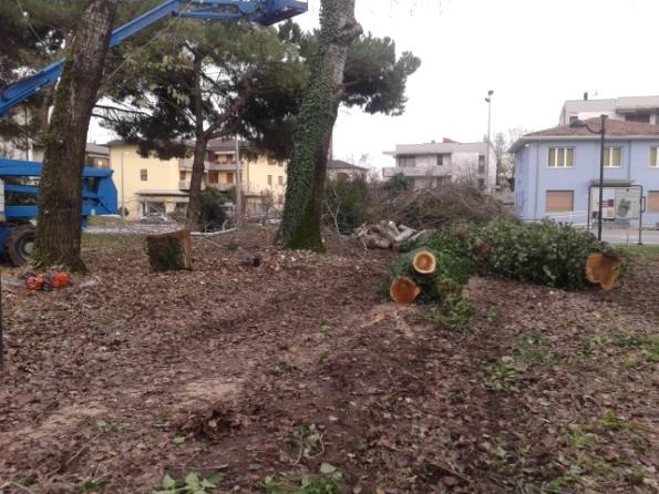 Padova, alberi tagliati