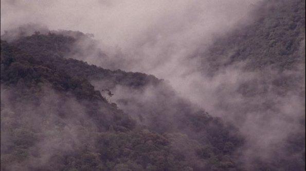 Sumatra, foresta tropicale