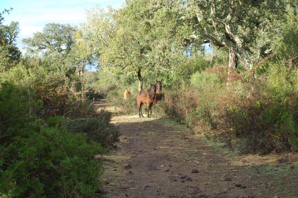 Cavallini della Giara (7 dicembre 2014)