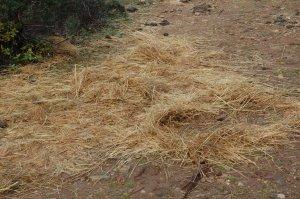 """Giara, presso Giardino botanico """"Morisia"""", foraggio distribuito per i Cavallini della Giara (7 dicembre 2014)"""
