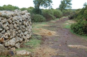 Giara, recinto di pietra (tancato) presso Pauli Piccia, foraggio distribuito per i Cavallini della Giara (7 dicembre 2014)