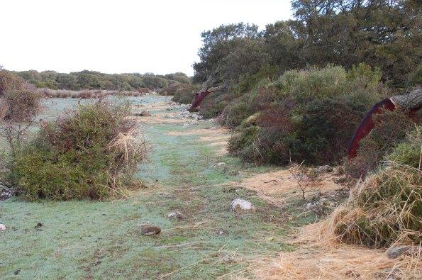 Giara, Pauli Majori, foraggio distribuito lungo le sponde per i Cavallini della Giara (7 dicembre 2014)