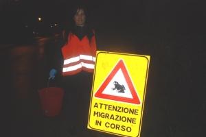 Colli Euganei, volontaria a sostegno della migrazione dei Rospi