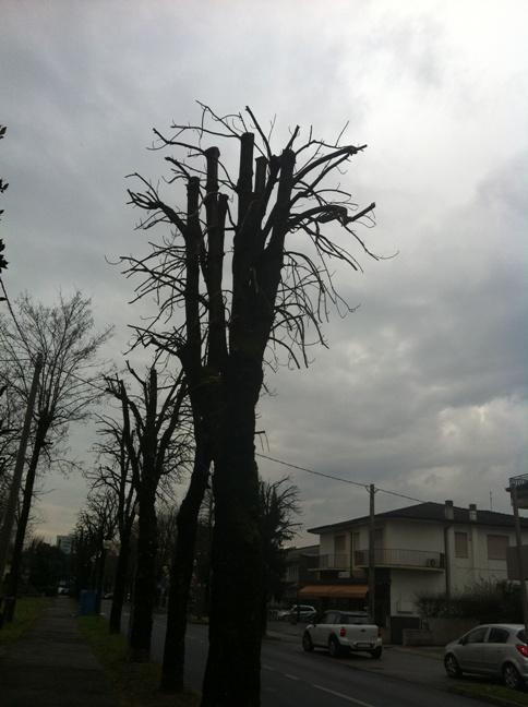 "Abano Terme, Via Mazzini, alberi ""potati"""