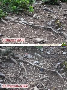 Foresta demaniale del Marganai, erosione del terreno nel bosco