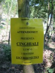 """Longare, cartello """"pericolo Cinghiali"""""""