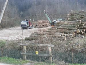 Parco naturale regionale dei Colli Euganei, taglio degli alberi davanti al rospodotto