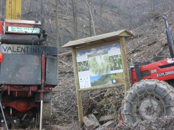 Parco naturale regionale dei Colli Euganei, Torreglia, taglio alberi