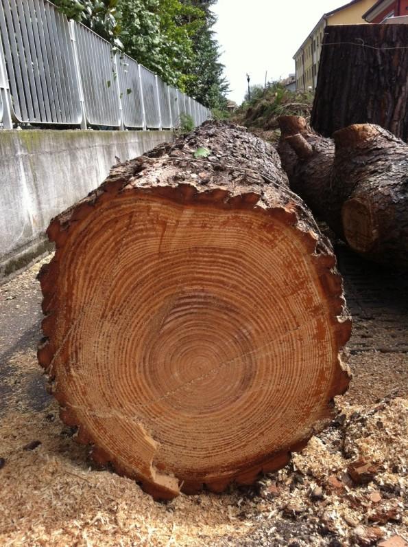 """Abano Terme, alberi tagliati apparentemente """"sani"""" e non """"malati"""""""