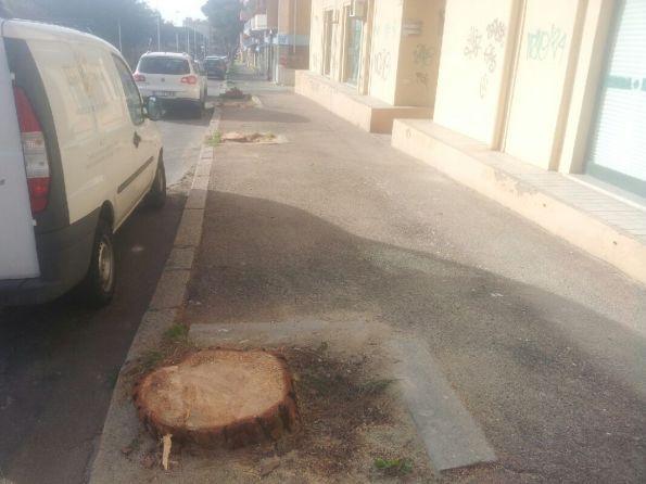 Carbonia, Via Trieste, alberi tagliati