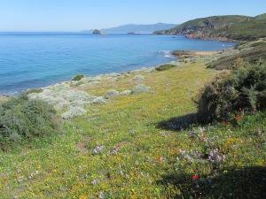 Planargia, litorale