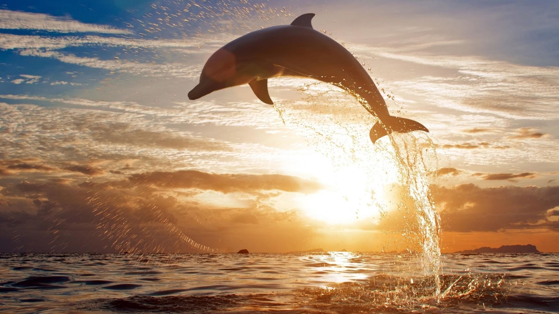 Quanto sono belli i delfini morti però . gruppo dintervento