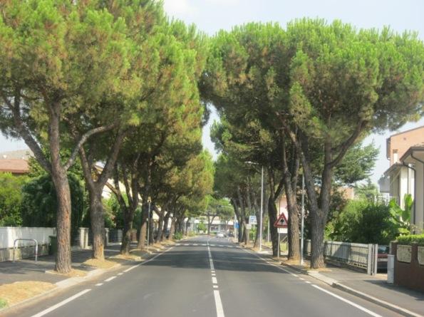 Selvazzano, alberi di Via Scapacchiò