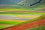 Piani di Castelluccio, fioritura (daFlickr)