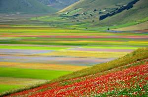 Piani di Castelluccio, fioritura (da Flickr)