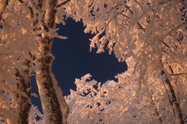 cristalli di neve e alberi