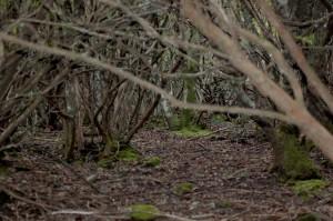 bosco in passato governato a ceduo
