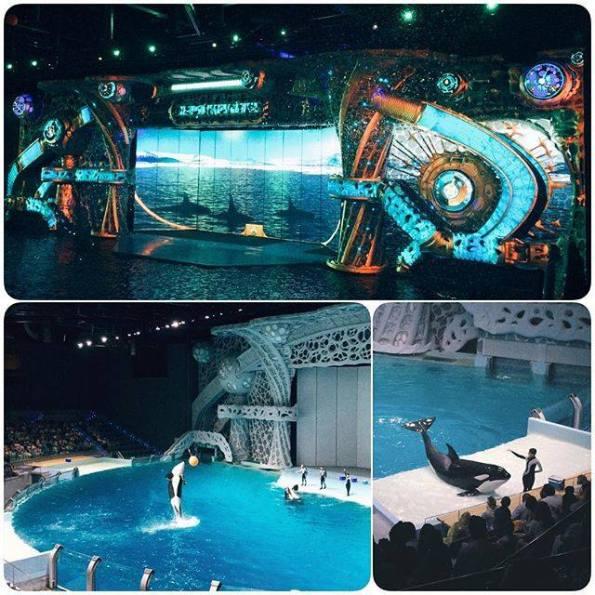 Mosca, Moscow Ocean Park, spettacoli con esemplari di Orca (Orcinus orca)