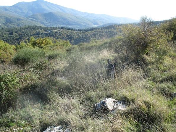 Calenzano, Le Croci, Monti della Calvana