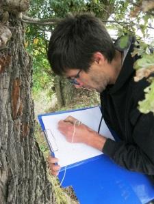 il dott. Gabriele Pezzani durante le operazioni di censimento (ott. 2015)